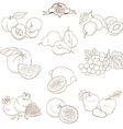 Set of Outline hand drawn fruits with leaves apple vector image