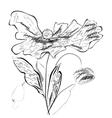 Stylized poppy flowers vector image