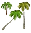 Three palm trees on a white background vector image