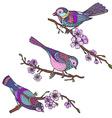 Ste of hand drawn ornate birds on sakura branches vector image