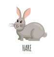 Cute Hare in flat style vector image vector image