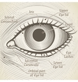 human eye etching with captions Cornea vector image vector image