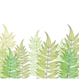 card with fern vector image