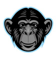 chimp head vector image