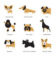 different dogs breeds characters set of vector image