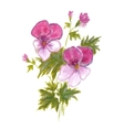 Bush garden pink pansies vector image