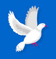flying white pigeon isolated on blue background vector image