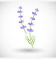 lavender plant flat icon vector image