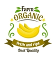 Organic farm banana fruits retro badge design vector image