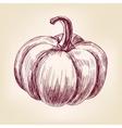 Pumpkin hand drawn llustration realistic vector image vector image