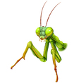 A praying mantis vector image