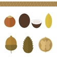 Set of nuts elements for design vector image