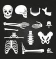 human bones collection on chalkboard vector image