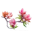 Watercolor Summer blooming pink magnolia flowers vector image