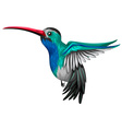 Humingbird flying on white background vector image