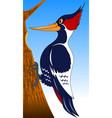 woodpecker vector image