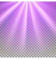 Purple flare rays vector image