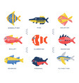 collection of sea and ocean fish and lettering vector image