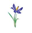 vector violet flowe spring crocus vector image