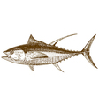 engraving tuna vector image
