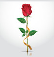 Beautiful red rose with gold ribbon vector image