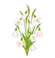 Bouquet of flowers snowdrops on white background vector image