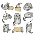 Set with cute cats in various poses vector image