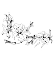 Summer garden blooming flowers monochrome vector image