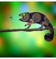 Chameleon and dragonfly vector image