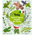 Italy herbs and spices vector image
