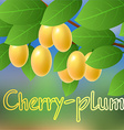 Yellow juicy ripe sweet cherry plum hanging on a vector image