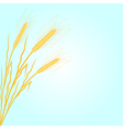 background with wheat vector image