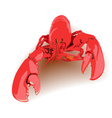 boiled lobster vector image