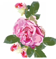 Vintage Watercolor Pink Rose flowers isolated vector image
