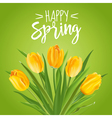 Spring Flower Background - with Tulips vector image