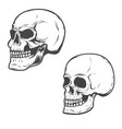 set of the skulls isolated on white background vector image