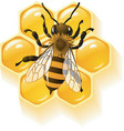 bee and honeycombs vector image