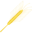 wheat ear isolated on white vector image