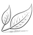 doodle leaves green nature vector image vector image