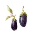 Watercolor hand drawn eggplant vector image