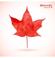 Watercolor red maple leaf vector image