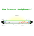 How fluorescent tube lights work vector image vector image