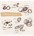 Collection of nuts vector image