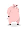 Sad pig Big fat boar melancholy sorrowful hog vector image