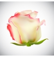 Realistic Rose High Quality vector image