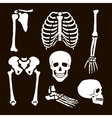 Collection Human Skeleton vector image