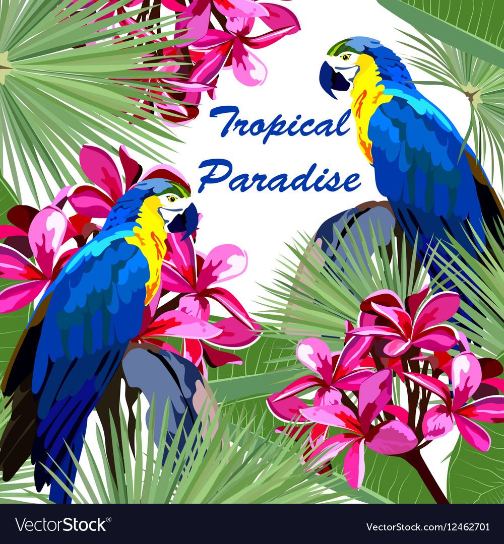 Exotic card with parrot birds and flowers vector