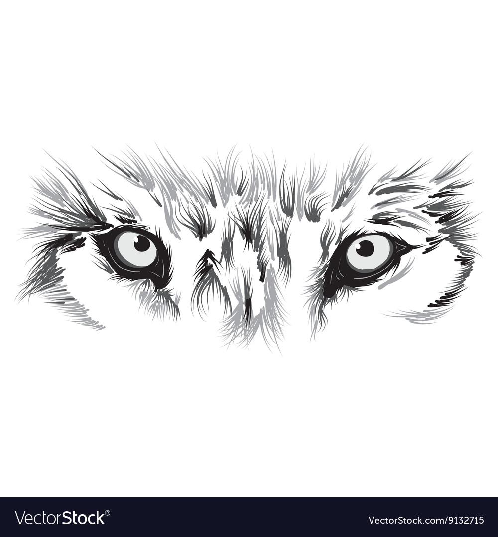 Beautiful wolf face vector