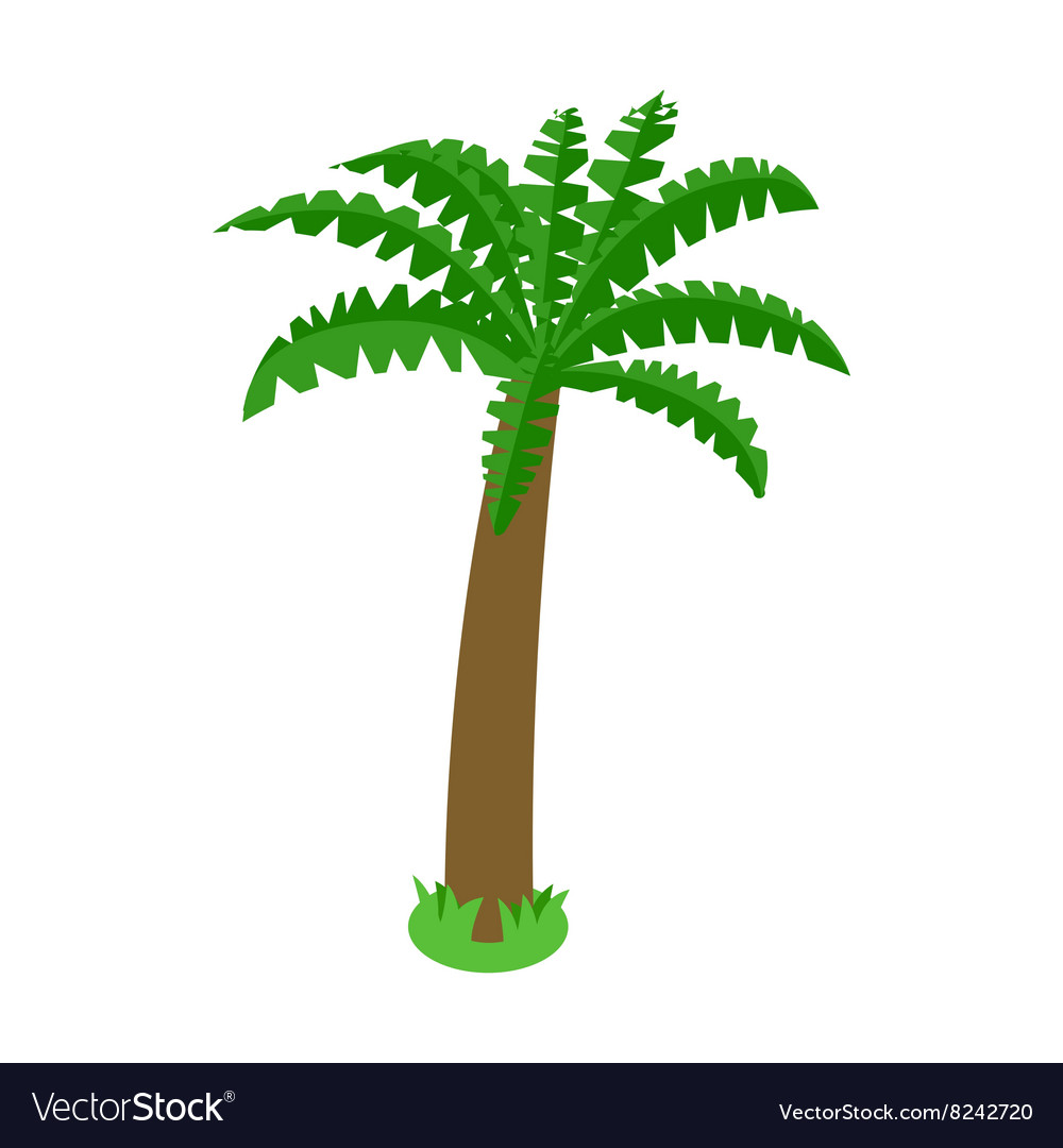 Palm tree icon isometric 3d style vector