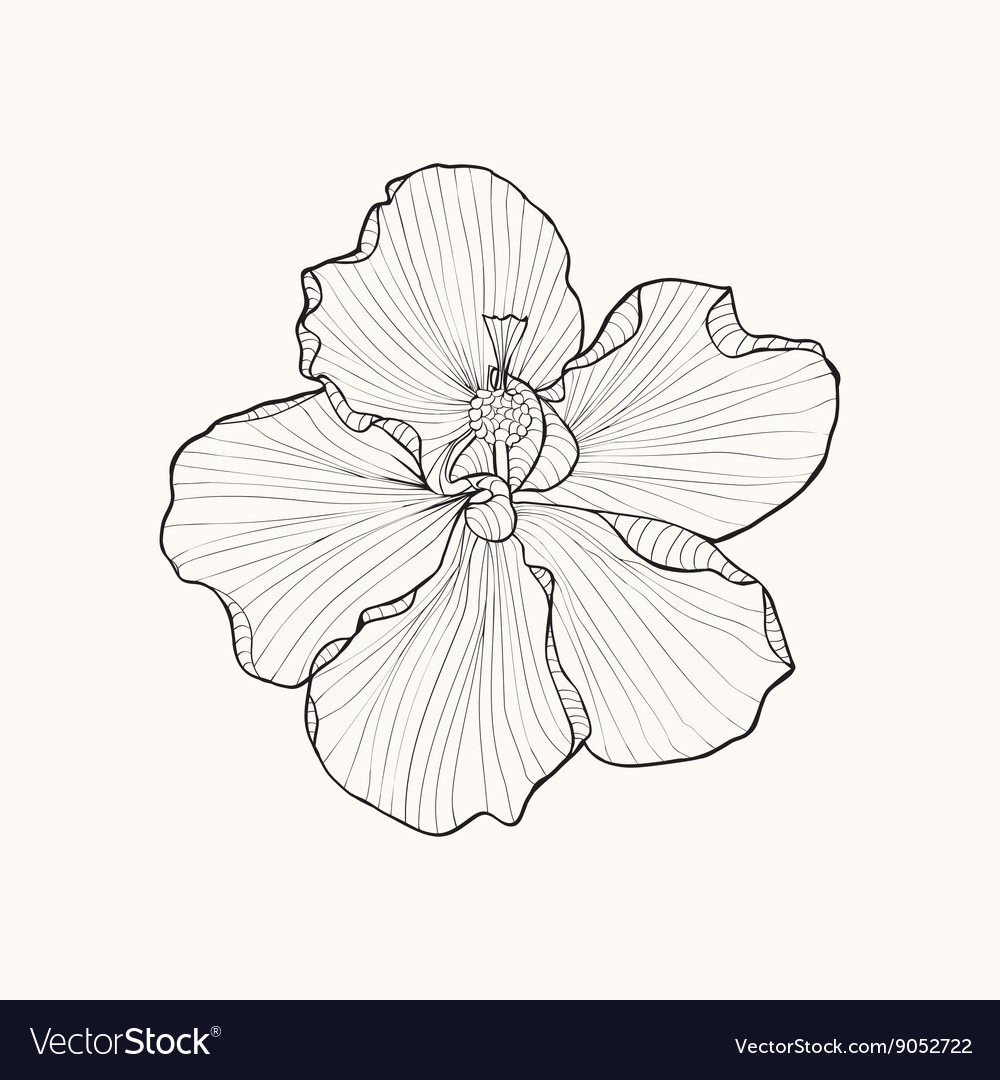 Hibiscus flower top view line pattern coloring boo vector